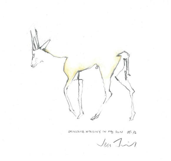 Jess Field | Field Architecture; Springbuck Walking in the Sun. Pencil on paper