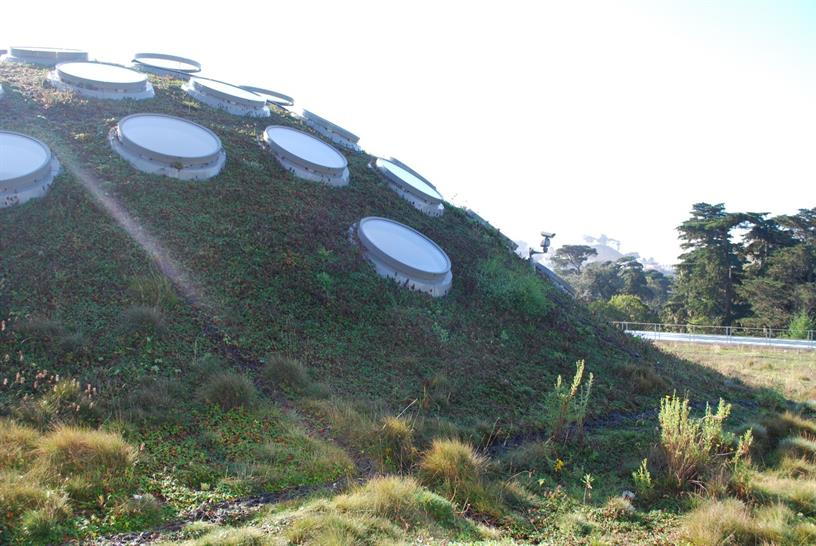 San Francisco Academy of Sciences Green Roof
