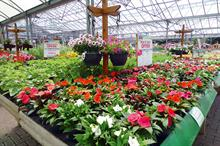 Britain's Best Plant Retailer (in association with The Sun)