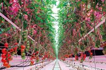 LED grower lighting systems