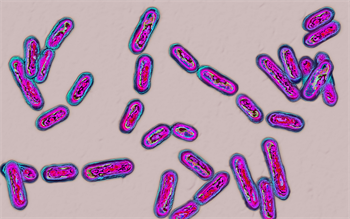 New antibody prevents recurrence of Clostridium difficile infection