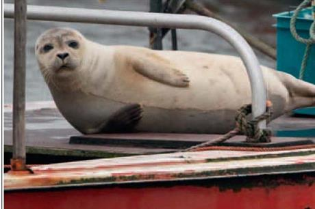 Floating platforms will provide resting places for seals