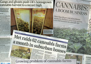 Newspaper coverage: DrugScope hit the headlines with a story about the increase in home-grown cannabis