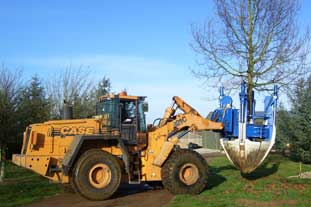 Hilliers launch 'super semi-mature' trees into UK market - photo: HW