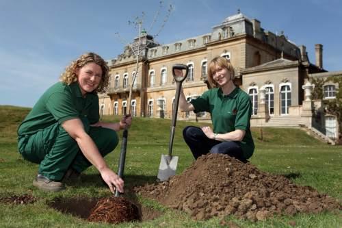 Planting of disease-resistant elms at Wrest Park - image - Wrest Park