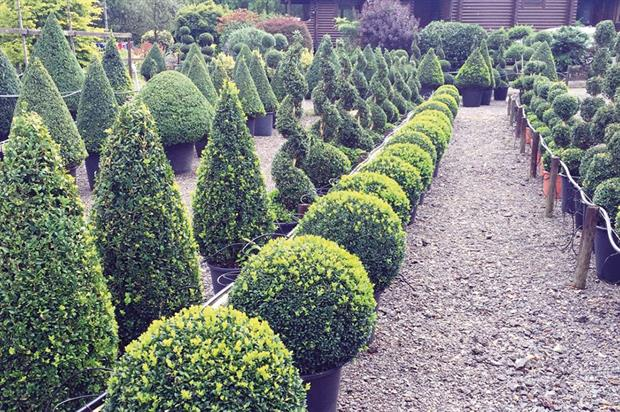 Crown Topiary: the family-run business is the UK's largest specialist topiary nursery - image: Crown Topiary