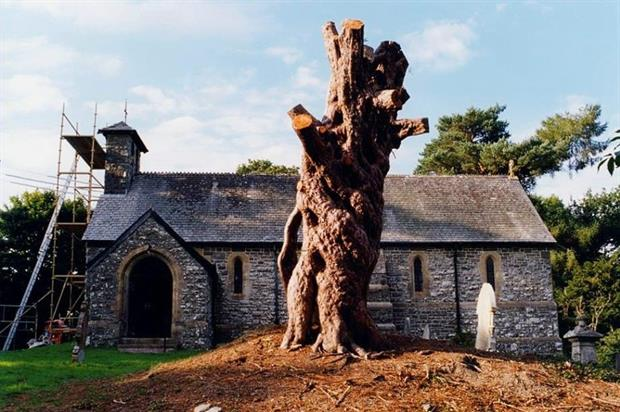 Remains of an ancient churchyard yew in Llangammarch, Powys - Image: Barrell Tree Consultancy