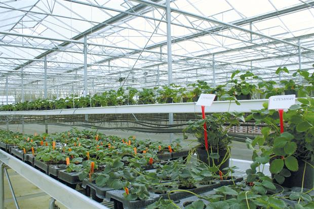 NIAB EMR: top-level research expertise and facilities provided for six-year fruit-crop studentship programme - image: HW