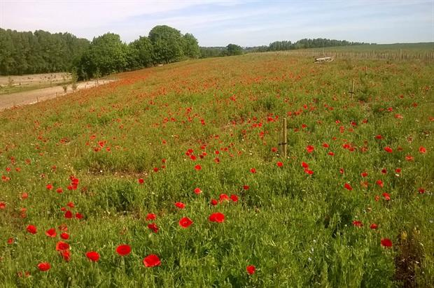 Tilhill soft landscaping work at Thannington Park in Canterbury, Kent. Image: Tilhill
