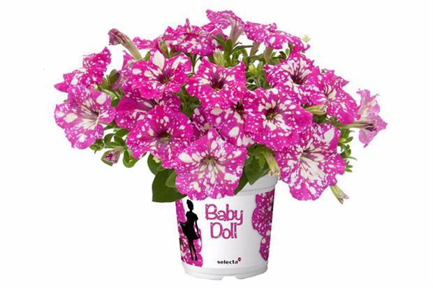 Petunia BabyDoll - image: Selecta
